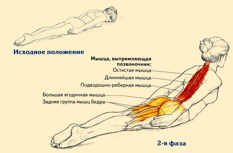 Упражнения на спину в домашних условиях для