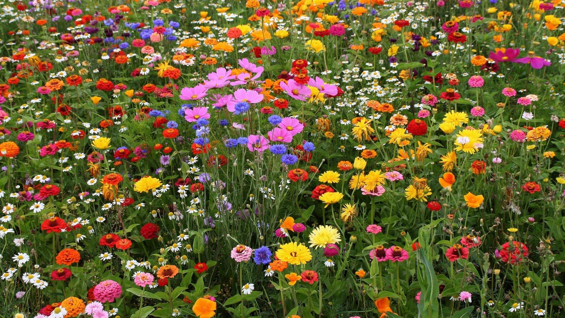 Полевые цветы полевые слова