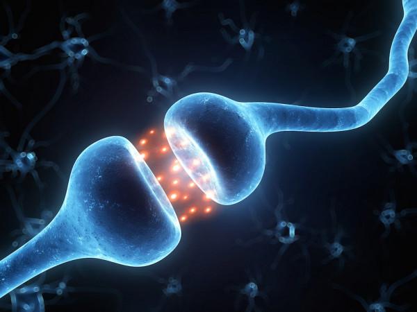 синапс, Как наш мозг формирует привычки и интеллект