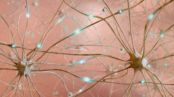 Нейронные цепочки