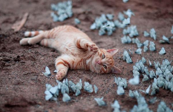 Тысяча граней удовольствия CatPlayingWithButterflies-2